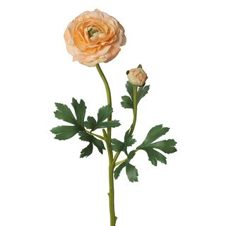 26-inch Ranunculus Stem (Pack of 12)