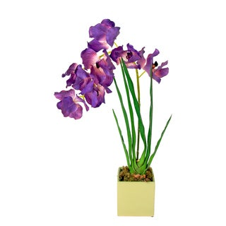 Creative Displays Purple Vanda Orchid Planter in Green Square Ceramic Vase