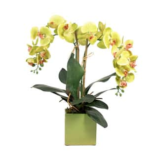 Silk flowers home decor shop our best home goods deals online at creative displays green phalaenopsis and bamboo in ceramic cube mightylinksfo