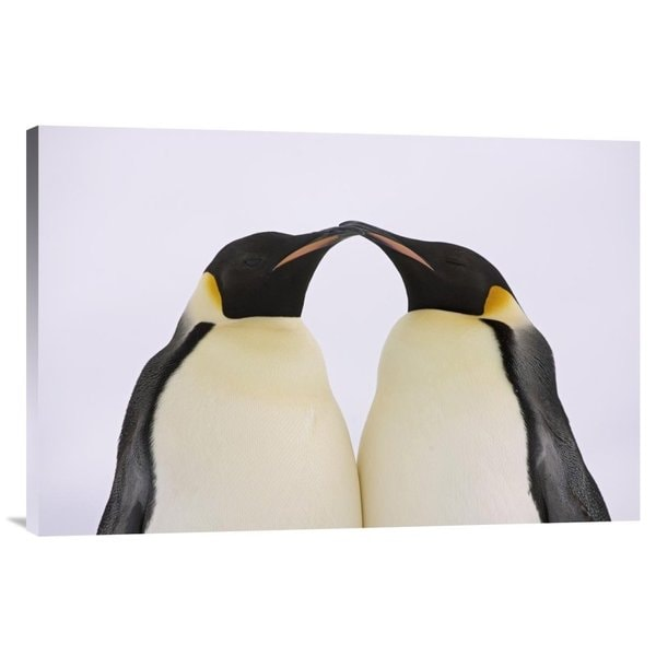 Global Gallery Ingo Arndt 'Emperor Penguin pair courting, Weddell Sea, Antarctica' Stretched Canvas
