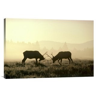 Big Canvas Co. Michael Quinton 'Elk two males sparring in the fall, Yellowstone National Park, Wyoming' Stretched C