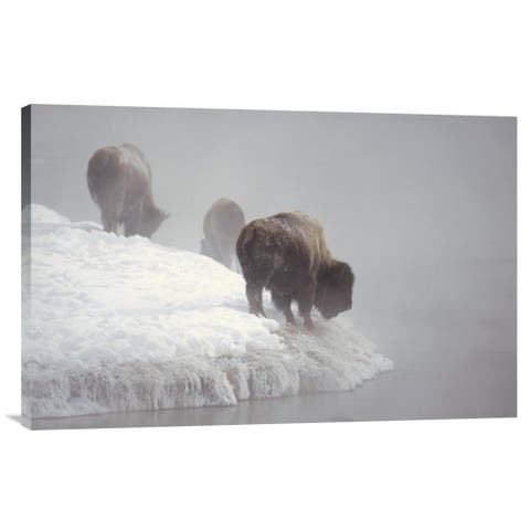 Global Gallery Konrad Wothe 'American Bison along snowy riverbank, Yellowstone NP, Wyoming' Stretched Canvas