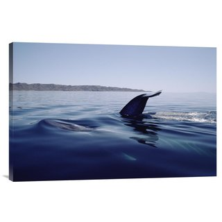 Global Gallery Flip Nicklin 'Blue Whale tail, Sea of Cortez, Mexico' Stretched Canvas