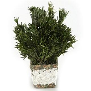 Silk Preserved Buxifolia Stoneware Planter