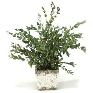 Preserved Parvafolia Stoneware Planter