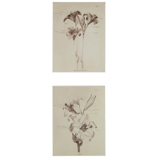 'Lillies' Wrapped Giclee Print Canvas Wall Art (Set of 2)