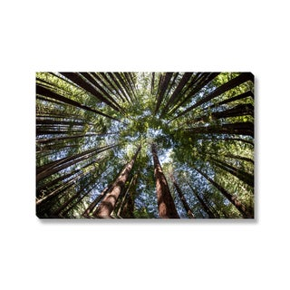 Gallery Direct Ead Seventy-Two 'Giant Redwood Forest Canopy' Gallery Wrapped Canvas
