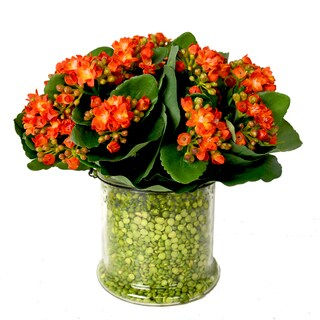 Orange Kalanchoe with Green Peas in Glass Vase