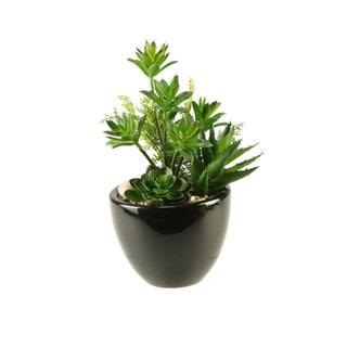 D&W Silks Succulents in Round Ceramic Planter