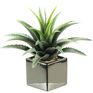 D&W Silks Star Succulent in Square Ceramic Planter