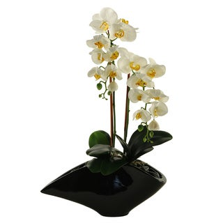 D&W Silks Cream Phael Orchids in Contemporary Black Resin Planter
