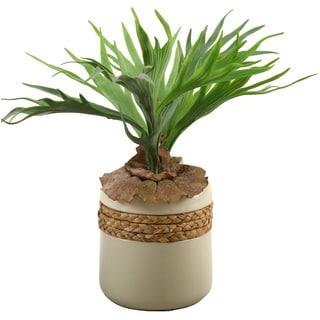 D&W Silks Staghorn Fern in Round Ceramic Planter