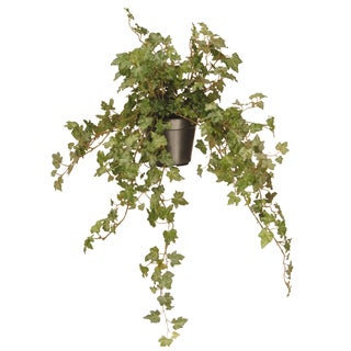 12-inch Green Ivy Plant in Black Pot