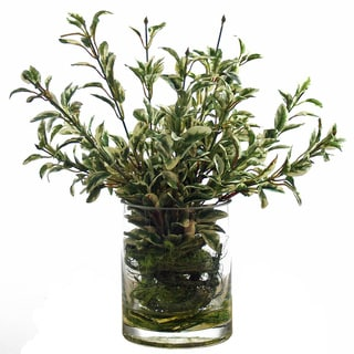 Variegated Boxwood Greens with Vine/ Curly Willow Moss in Glass Cylinder