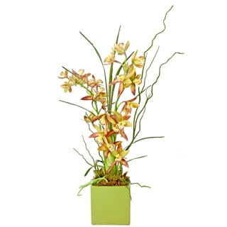 Creative Displays Cymbidium Orchid/ Curly Willow in Green Ceramic Square Vase