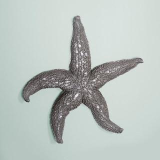 Deep Pewter Large Starfish