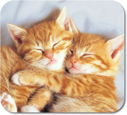 Cuddly Kittens Mouse Pad Free Shipping On Orders Over