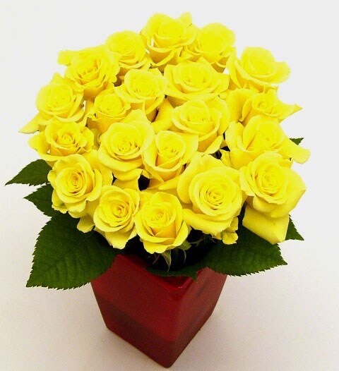 Yellow Sweetheart Roses (Case of 20)