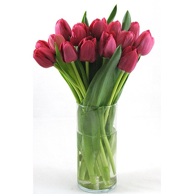 Red Tulips and Free Vase