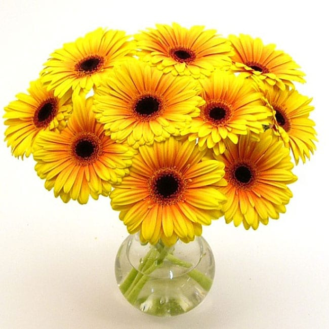 Yellow Gerbera Daisies Vase Free Shipping On Orders Over