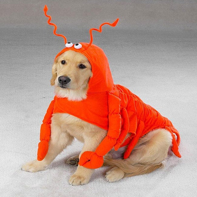 Lobster Paws Dog Halloween Costume