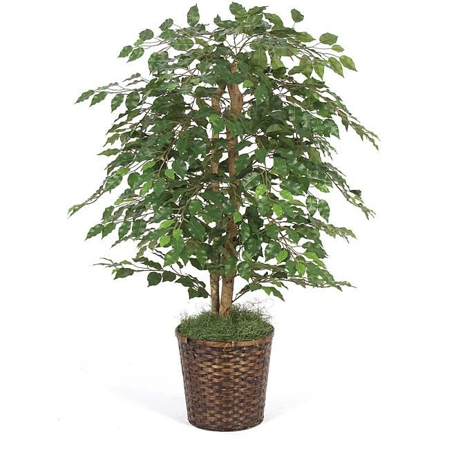 4-foot Green Ficus Bush