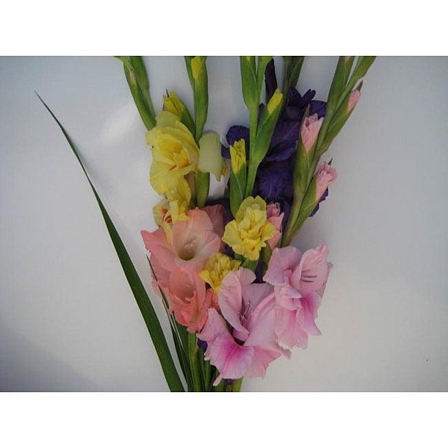 'Simply Glads' Gladiolus Bouquet
