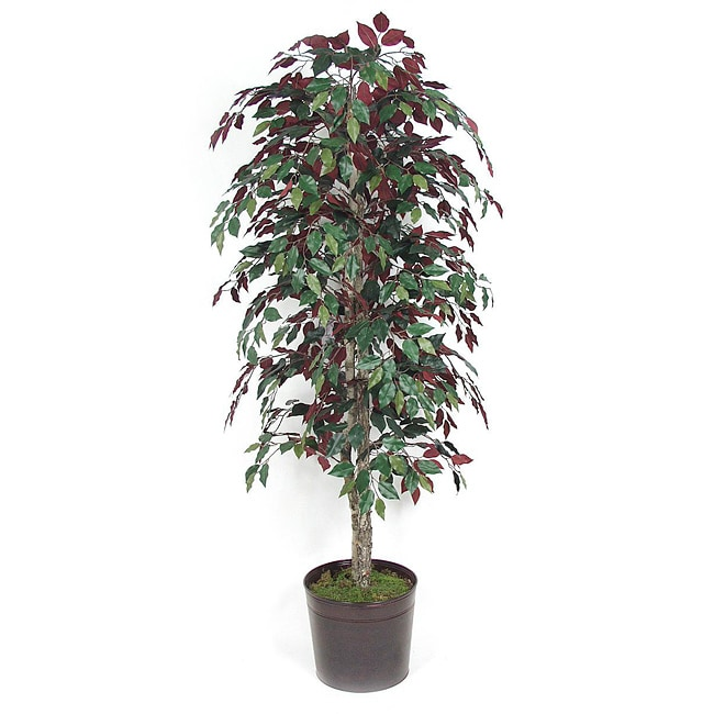 Decorative Metal Container and 6-ft Capenisa Bush