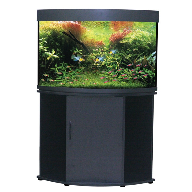 Compass Rose Corner 50-gallon Aquarium and Stand