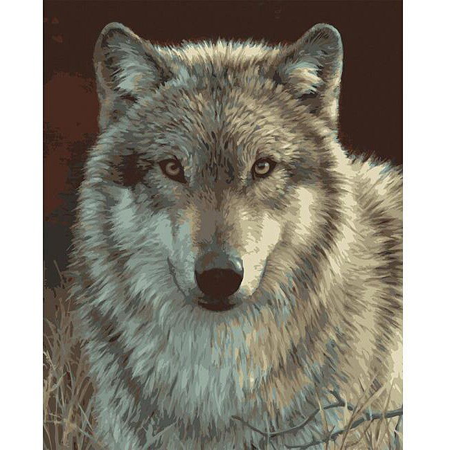 Paint By Number 'Grey Wolf' Kit