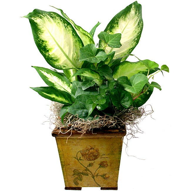 Tropical Plants in Wood Planter