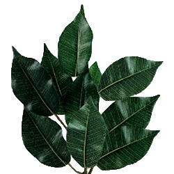 Six-foot Green Faux Ficus Tree - Thumbnail 1