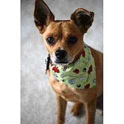 Ruff Stuff USA Black Happy Birthday Dog Collar Bandana