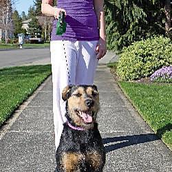 Animal Planet LED Flashlight Pet Leashes (Case of 2) - Thumbnail 2