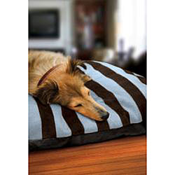 Animal Planet Ultra-Soft Large Pet Bed - Thumbnail 2