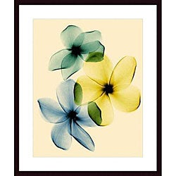Steven N. Meyers 'Plumeria' Wood Framed Art Print