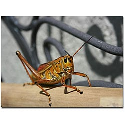 Patty Tuggle 'Grasshopper' Gallery-wrapped Canvas Art