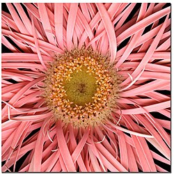 Keith Berr 'Pink Spider' Gallery-wrapped Canvas Art