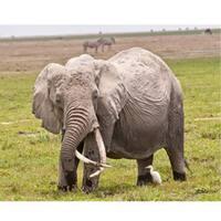 Stewart Parr 'Elephants in Kenya The Old One' Photo Art