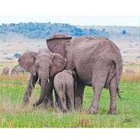 Stewart Parr 'Elephants in Kenya Huddling' Photo Art