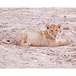 Stewart Parr 'Cub Lion in the Kenya Serengeti Plains Resting' Photo Print