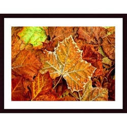 John K. Nakata 'Frost On Leaf' Wood Framed Art Print