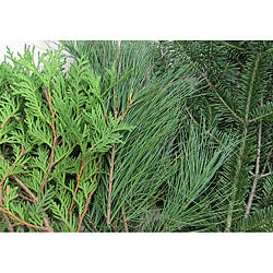 10-pounds Fresh Balsam Cedar and Pine Boughs