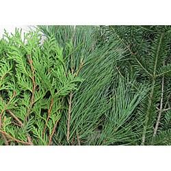 10-pounds Fresh Balsam Cedar and Pine Boughs