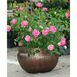 Classic Metal Planter with Antique Copper Finish (Made in India) - Thumbnail 0