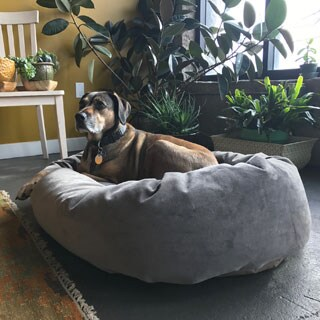 Majestic Pet Villa Collection Micro-velvet Bagel-style Large/Extra Large Dog Bed with Removable Washable Cover