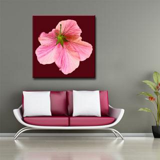 Ready2HangArt Bruce Bain 'Hidden Hibiscus' Canvas Art