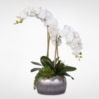 Double-Stem Real Touch Phalaenopsis Silk Orchid Arrangement with Succulents in Silver Deco Pot