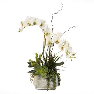 real touch phalaenopsis silk orchid arrangement with succulents in a stone pot: day orchid decor