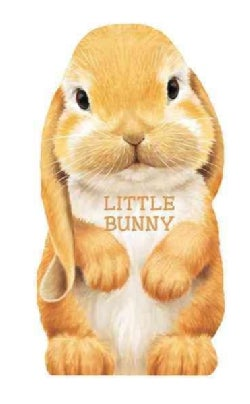 Little Bunny (Board book)